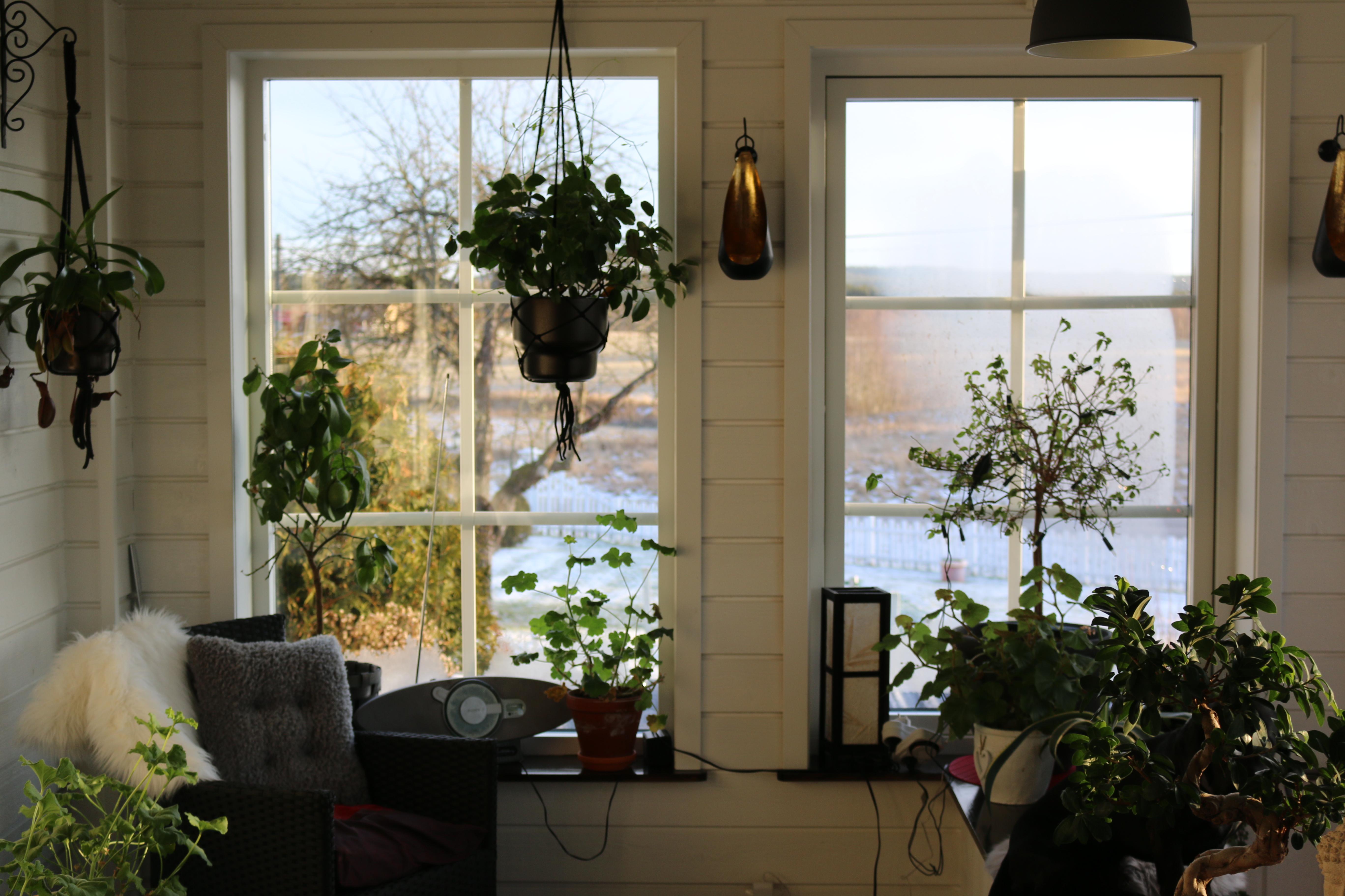 Byte av fönster och dörrar